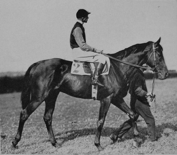 Первые буденновские лошади
