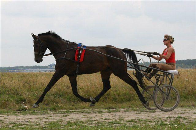 Хомут нужно выбирать исходя из целей использования лошади