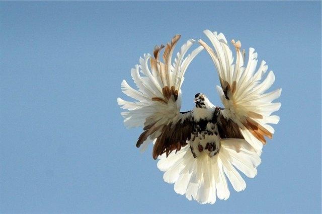Для птиц дрессированных на круговой лет в апреле необходимо включать в рацион больше углеводов