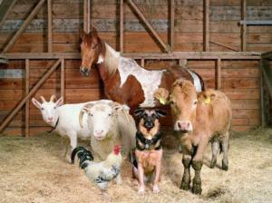 Животные, которые могут быть носителем вируса