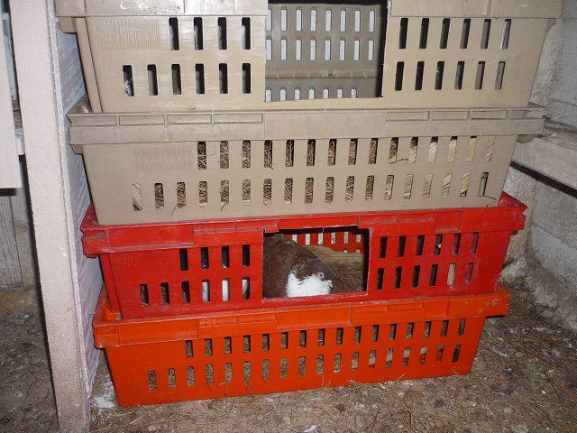 На ночь подготовленную пару закрывают в паровочном ящике