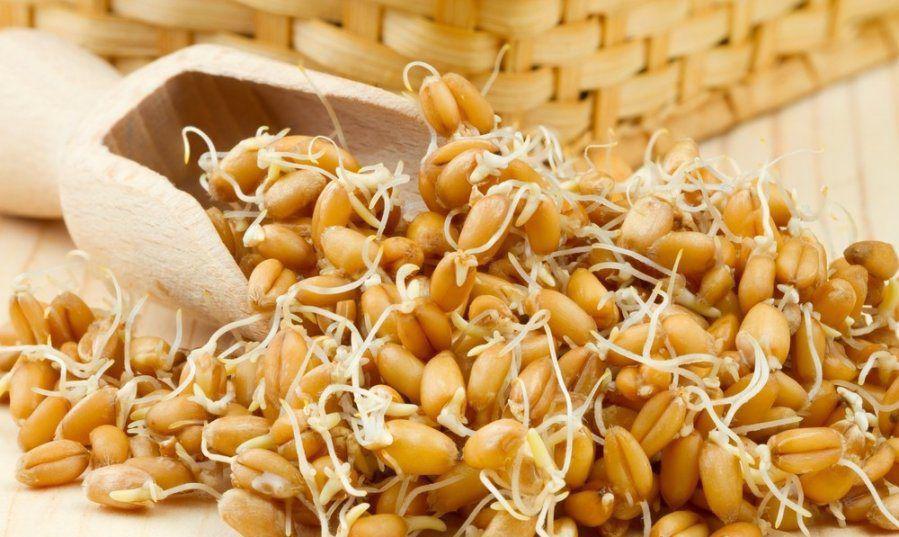 Для стимулирования процесса размножения можно добавить в рацион птиц пророщенное зерно