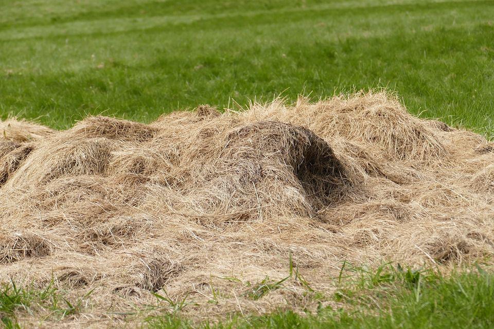 Заготовленное сено нужно хранить не на поле в стогах, а в сараях или под навесами