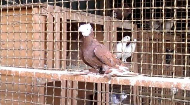 Необходимо сделать перегородки, чтобы была возможность отсаживать птиц