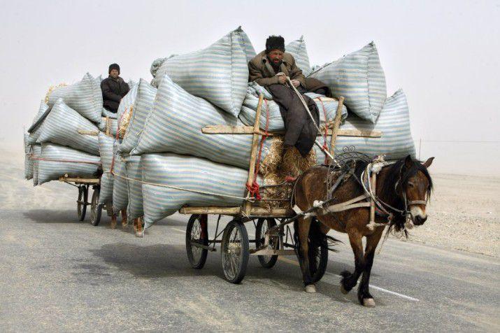 Из-за преимущества в скорости использование лошадей с хомутами было рациональней, чем использование волов