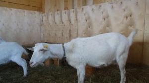Изоляция больных животных от здоровых