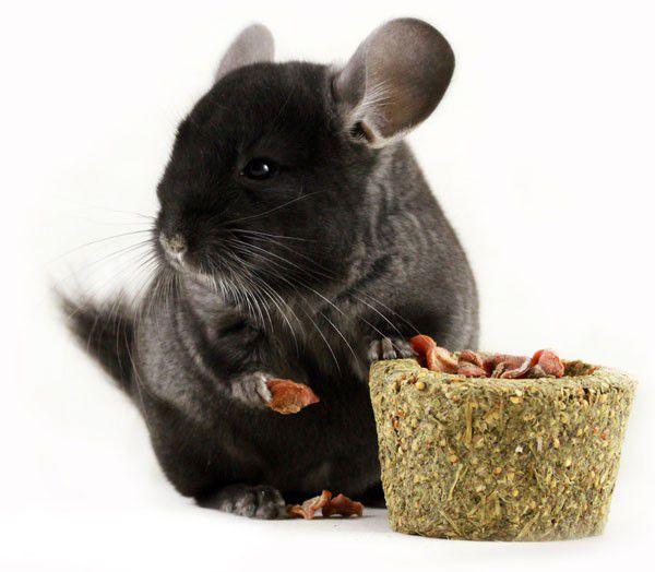 Если грызуны выбирают из смесей какие-либо продукты, стоит приобретать однокомпонентные корма