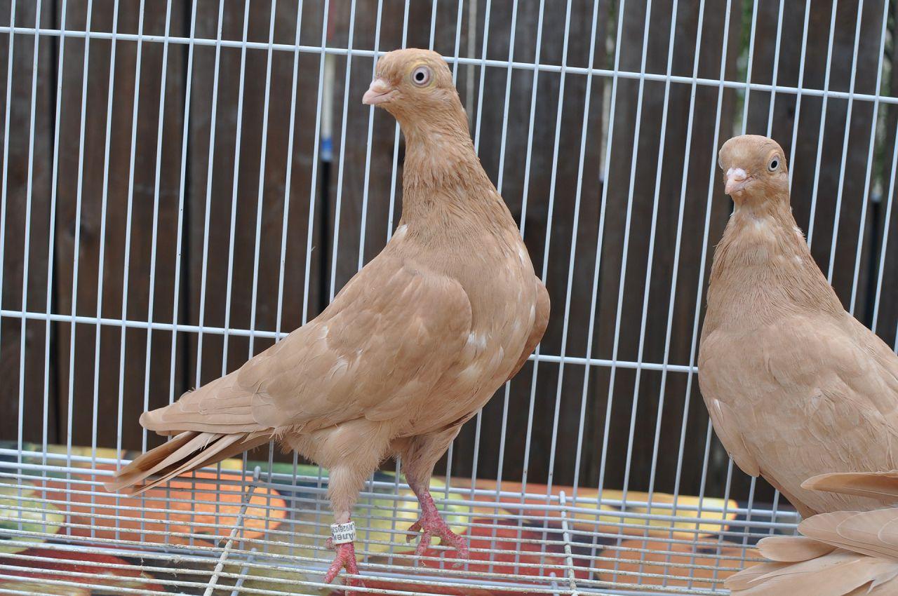 При составлении рациона важно учитывать условия содержания птиц