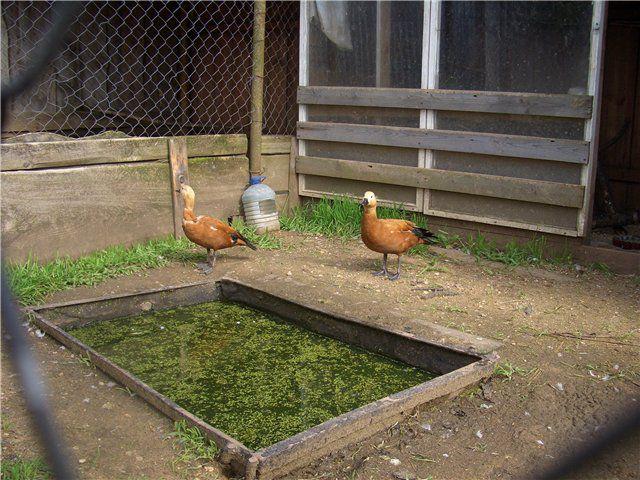 Вода в поилке всегда должна быть свежей и чистой