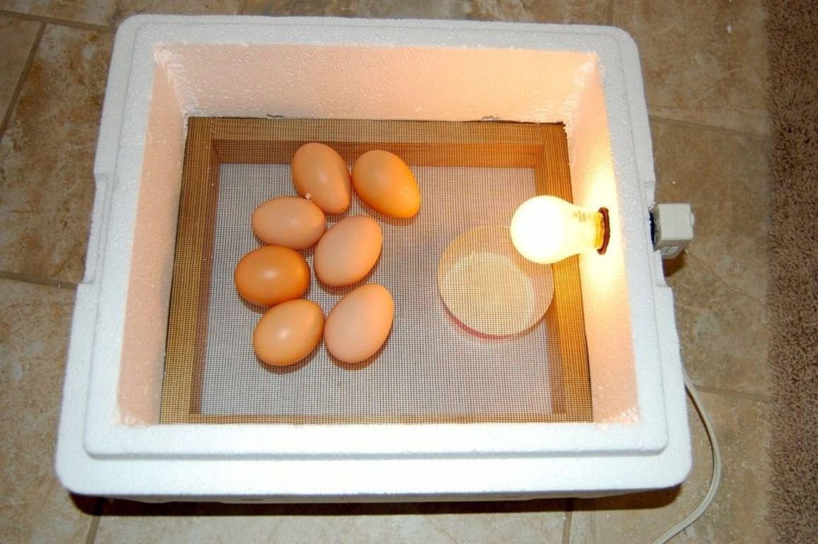 Яйца в самодельном инкубаторе