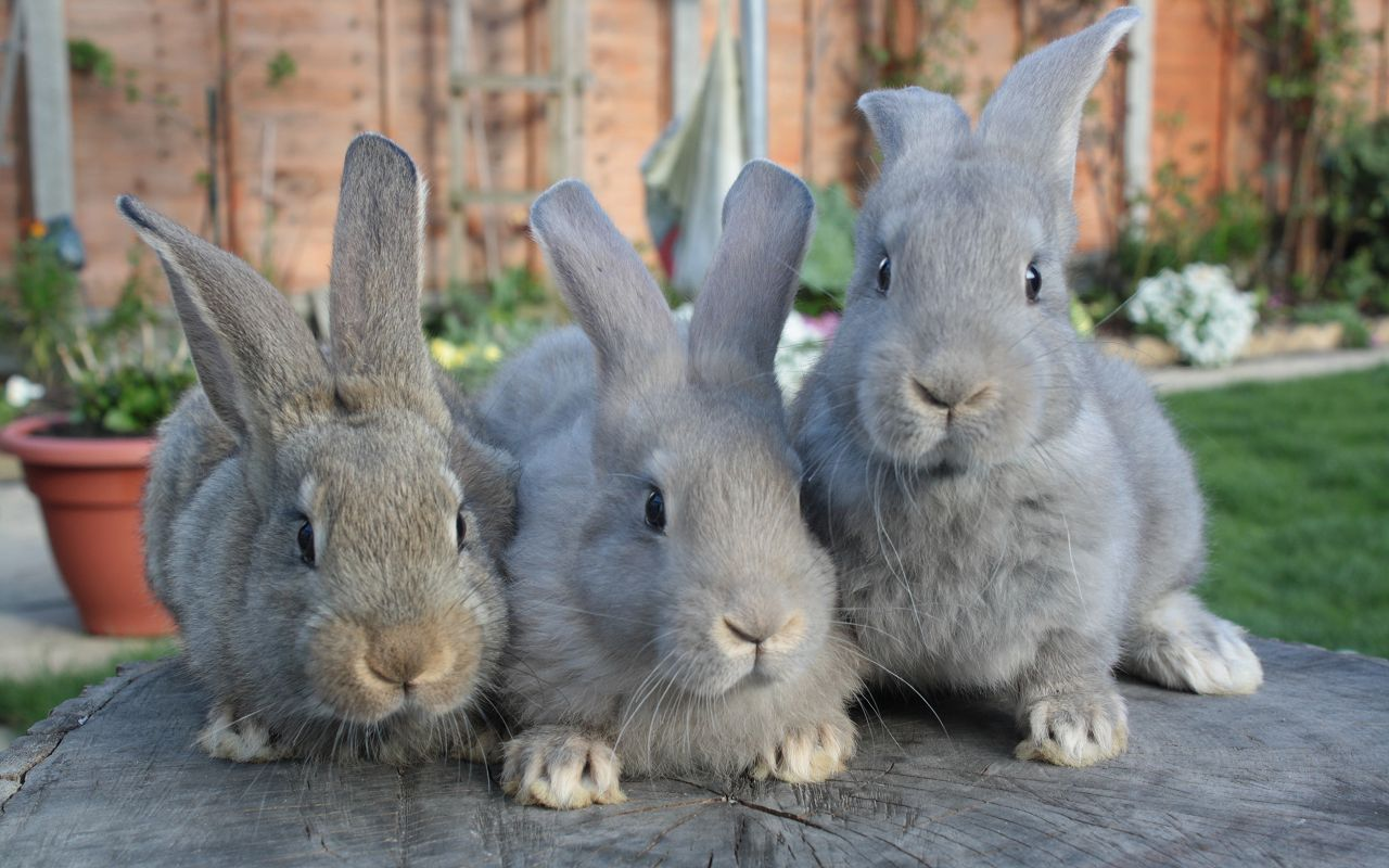 Правильное питание - залог здоровья кроликов