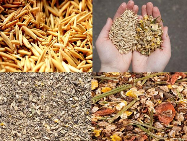 Основа полноценного рациона - сено и зерновые культуры