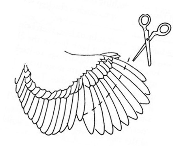 Схема подрезки