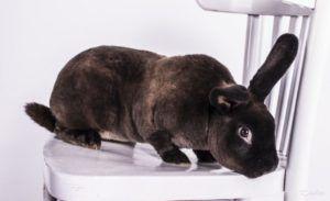Флегматичность и пугливость - признак больного кролика