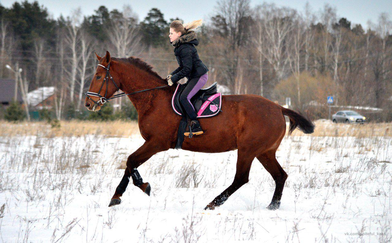 Буденновская лошадь в упражке