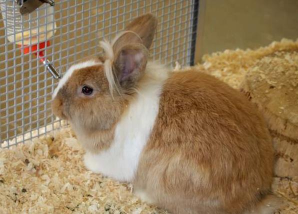 Для профилактики кроликов нужно содержать в чистоте, кормить только проверенными кормами