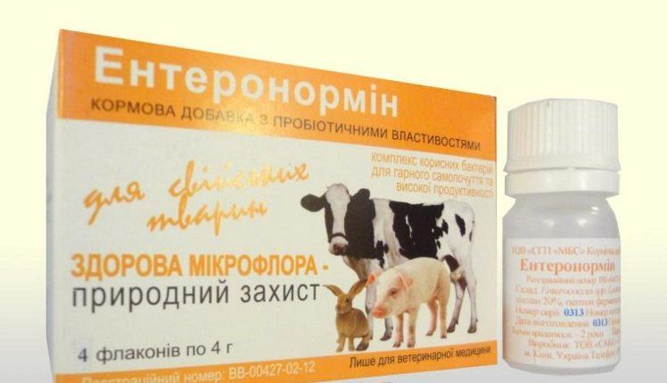 Пробиотики для телят.