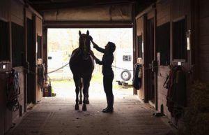 При содержании лошадей в конюшне помещения не освещают