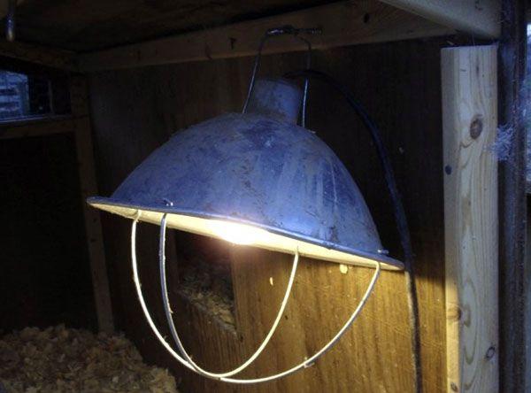 Пример искусственного освещения в гусятнике