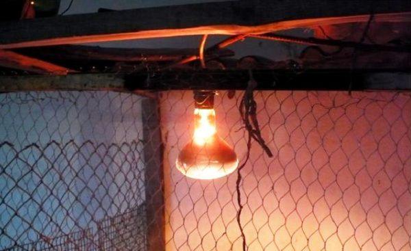 В зимнее время в птичнике необходимо дополнительное освещение