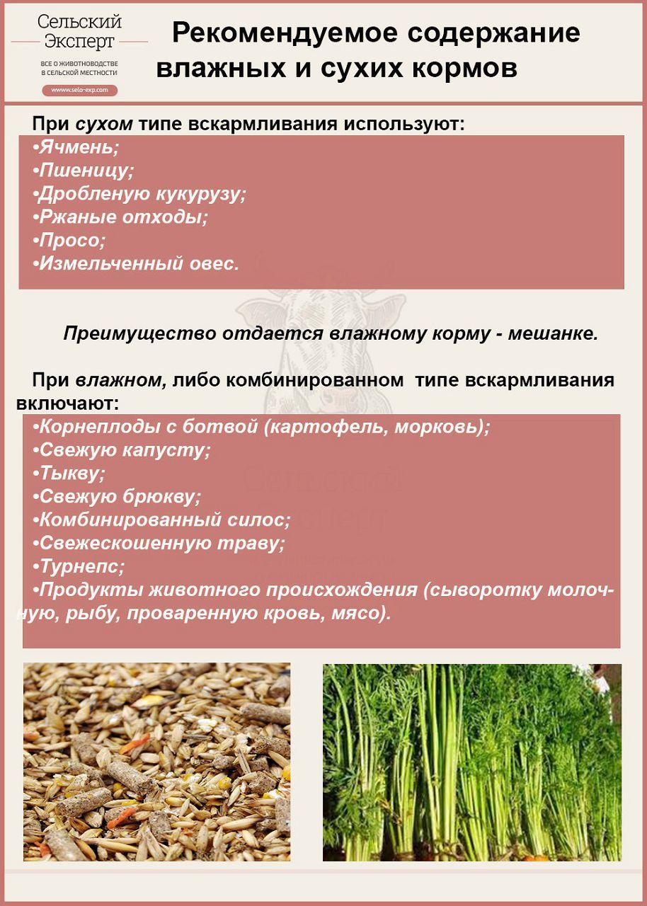 Рекомендуемое содержание сухих и влажных кормов для птиц