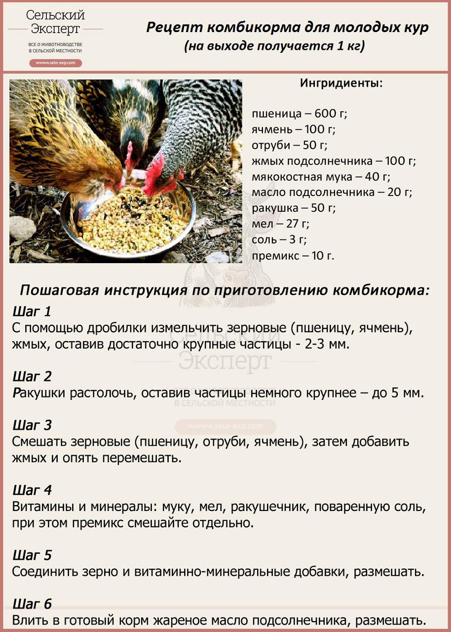 Пошаговая инструкция приготовления комбикорма для молодых кур (от 21 до 48 недель)