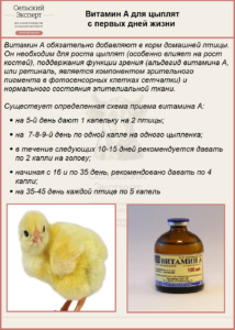 Витамин А для цыплят с первых дней жизни