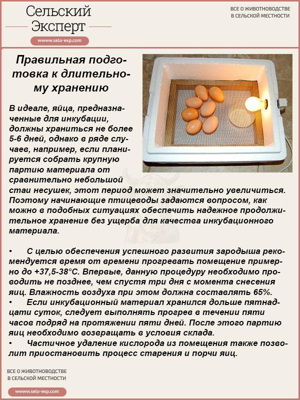Правильная подготовка к длительному хранению яиц перед инкубацией
