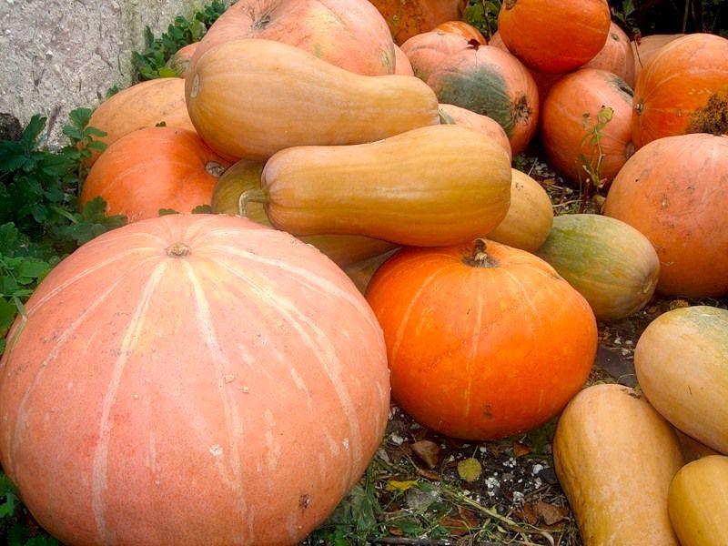30% объема в рационе кур должны составлять овощи