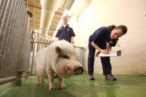 Ветеринарно-санитарный контроль