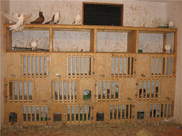Для выведения птенцов необходимы гнезда
