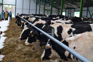 На фермах вспышки ИРТ возникают периодически, преимущественно осенью или зимой