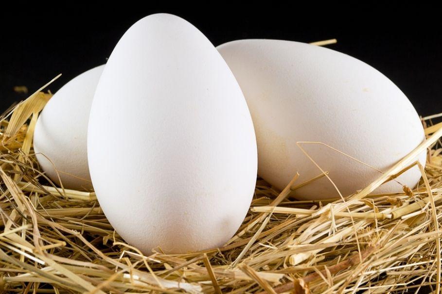 Крупные яйца Датского Легарда