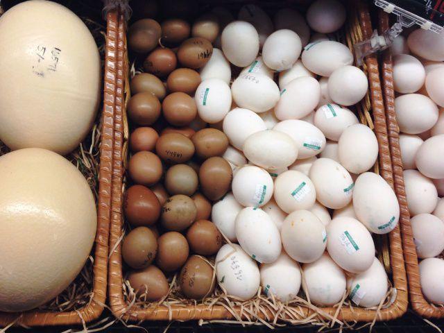 Хранение инкубационного яйца до закладки в инкубатор