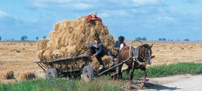 Изобретение хомута позволило использовать лошадей для перевозки грузов