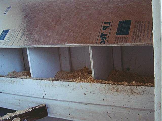 На фото в гнездо индоутки насыпаны опилки