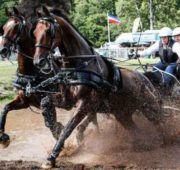 Представители голштинской породы достаточно сильные и выносливые лошади