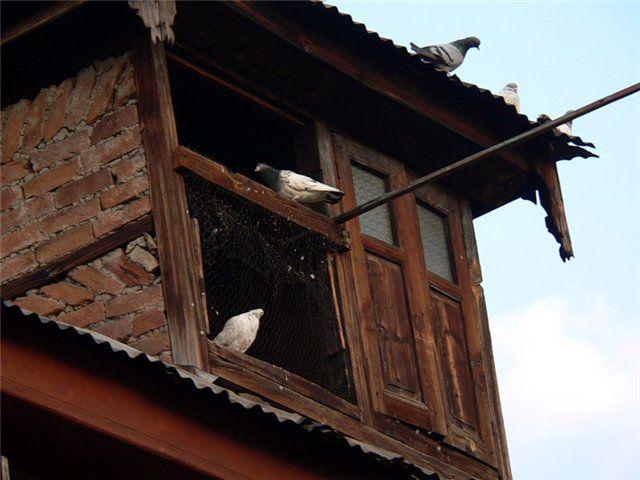 Или как вариант, постройка на крыше
