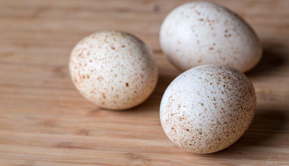 Яйценоскость индюшек породы Хайбрид Конвертер средняя, примерно 50 яиц за 3 месяца