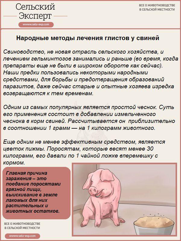 Народные методы лечения глистов у свиней