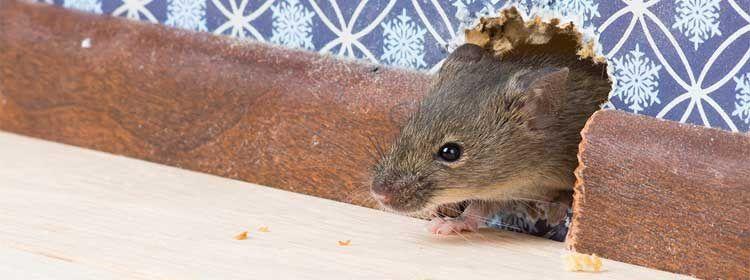 Крысиная норка