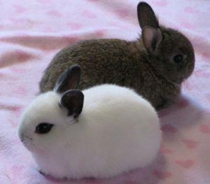 Кролики обладают прекрасным характером