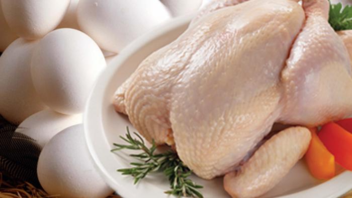 Мясо и яйца птицы становятся непригодными для употребления в пищу