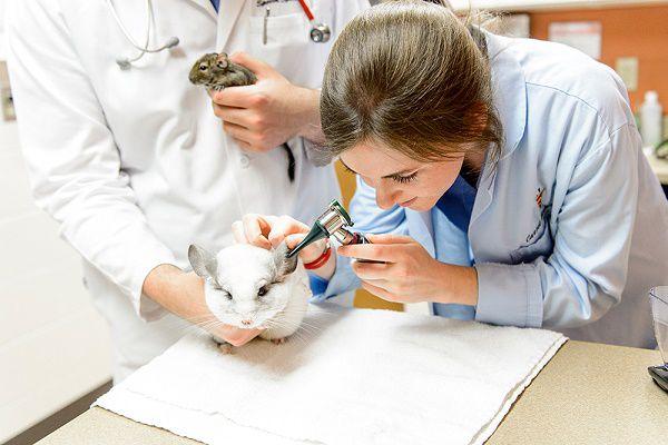 Консультация у ветеринара