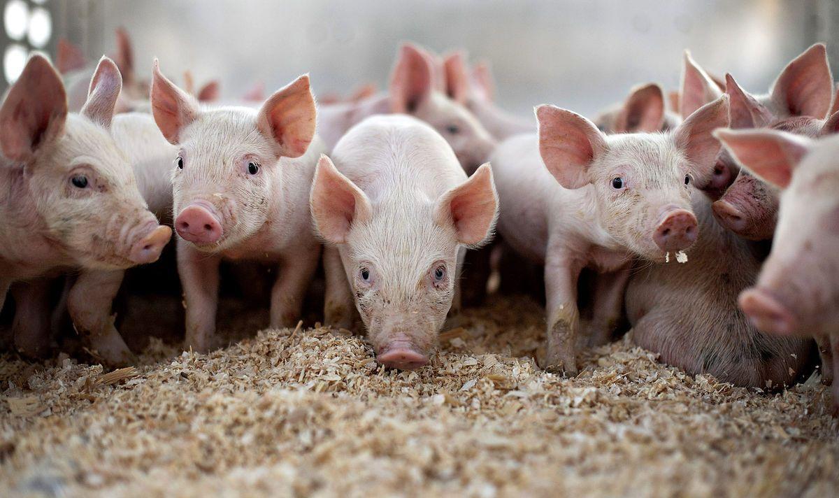 Процесс жизнедеятельности бактерий безвреден для животных