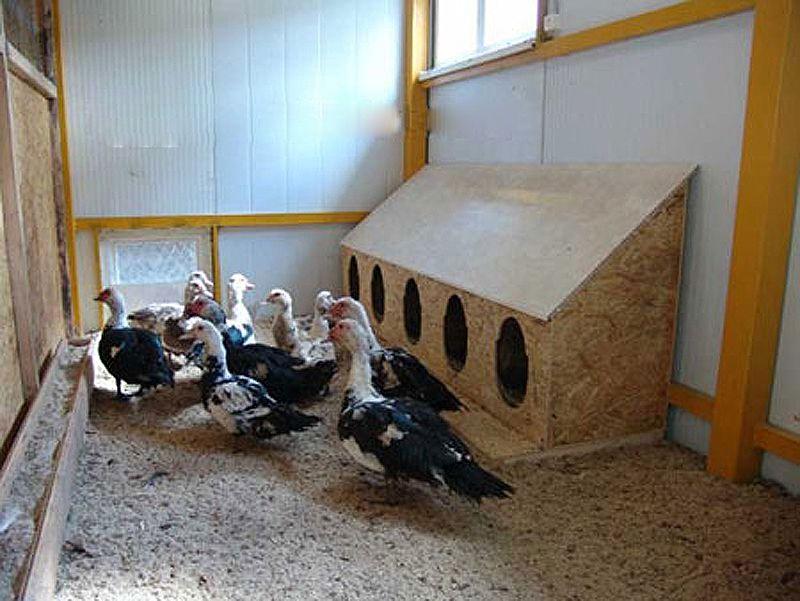 Длинный домик для пяти уток