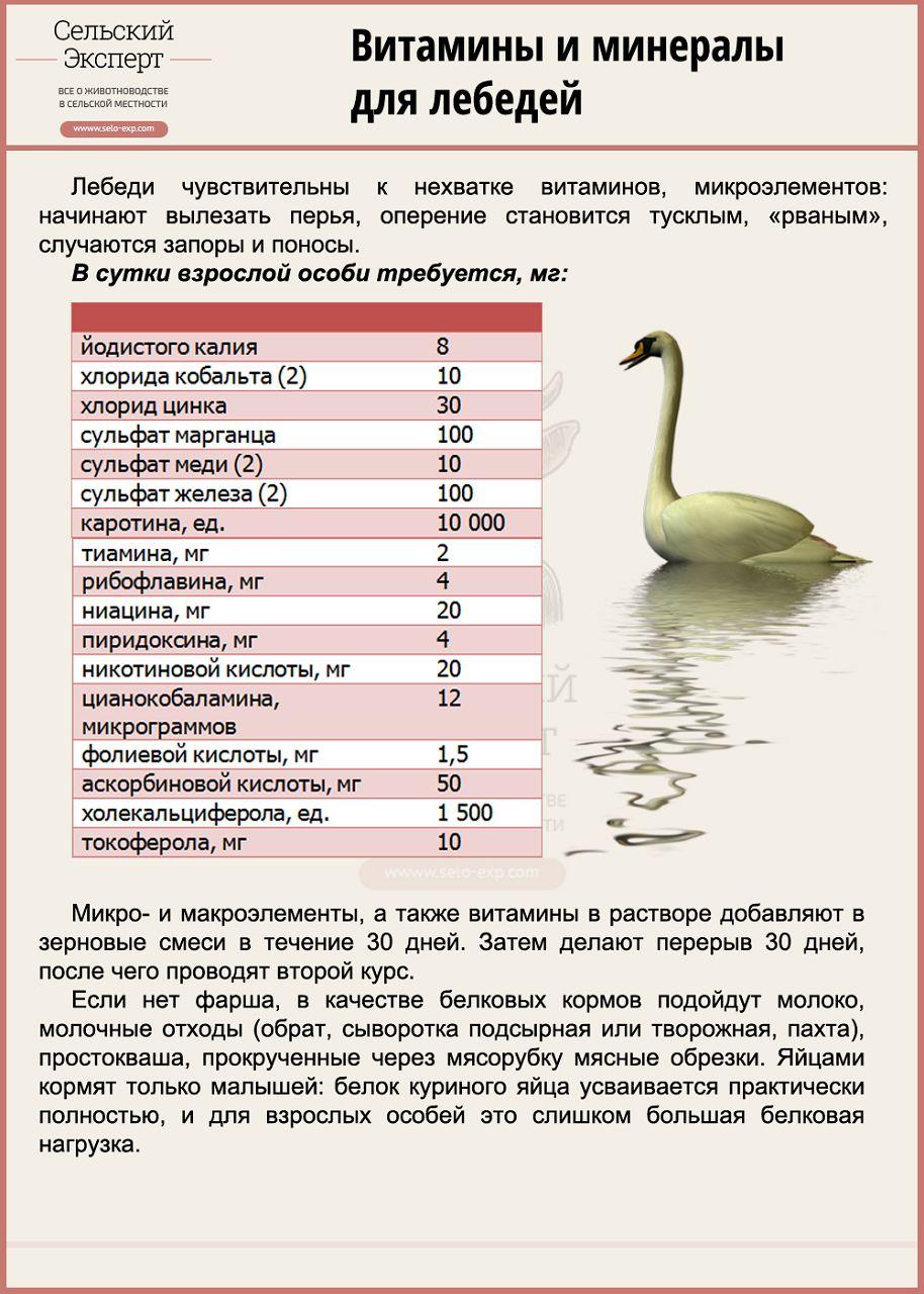 Витамины и минералы для лебедей