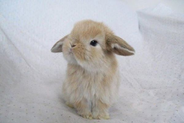 Воротить нос от лотка кролик может по разным причинам