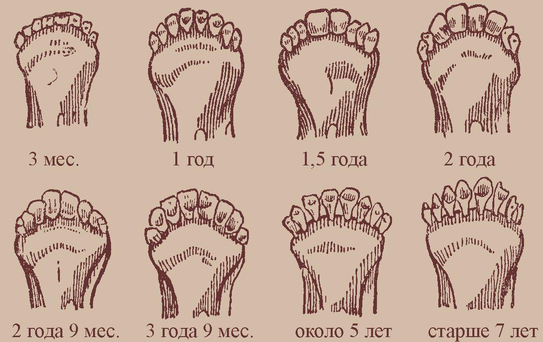Состояние зубов козы