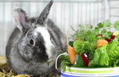 В рационе кроликов преобладают зеленые корма